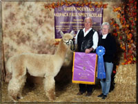 Summerhill Alpaca Breeders NH