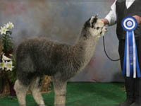 Summerhill Alpacas Herdsire Breedings Vermont